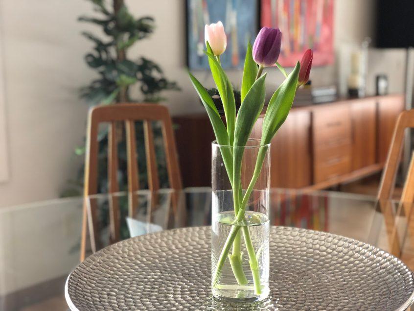 Simplicity - spring tulips